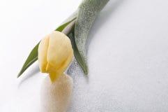 Bloesem van de de lente de gele tulp op natte grijze achtergrond Stock Foto