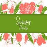 Bloesem van schets de lineaire tulpen royalty-vrije illustratie