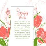 Bloesem van schets de lineaire tulpen stock illustratie
