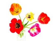 Bloesem van tulpen royalty-vrije stock foto