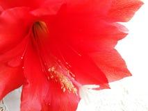 Bloesembloem Artistiek kijk in uitstekende levendige kleuren Royalty-vrije Stock Fotografie