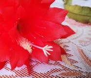 Bloesembloem Artistiek kijk in uitstekende levendige kleuren Royalty-vrije Stock Afbeeldingen