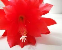 Bloesembloem Artistiek kijk in uitstekende levendige kleuren Royalty-vrije Stock Foto's