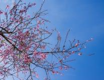 Bloesembloemen en blauwe hemel in specifiek seizoen stock fotografie