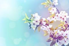 Bloesemboom over aardachtergrond enkel Geregend stock foto's