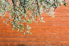 Bloesems met een bakstenen muur stock afbeelding