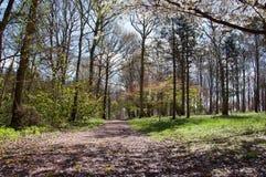 Bloesems van de bomen in Herefordshire Royalty-vrije Stock Foto's