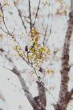 Bloesems van de zacht-tonen de roze en witte lente op een boom met overcas Stock Foto's