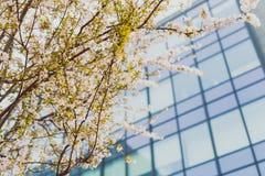 Bloesems van de zacht-tonen de roze en witte lente op een boom met overcas Stock Afbeelding
