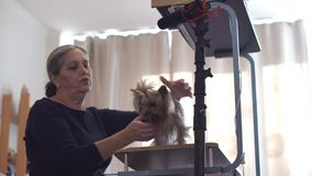 Blog video envejecido del expediente de la mujer sobre animales domésticos almacen de metraje de vídeo