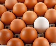 Blok van het close-up het witte eierleggen pape Stock Afbeeldingen