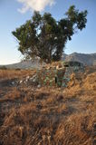 Blokhauz pod drzewem Zdjęcie Royalty Free