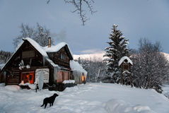 Blokhuis in de wildernis met zwarte hond Royalty-vrije Stock Fotografie