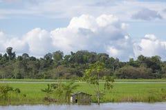 Blokhuis op stelten langs de rivier van Amazonië en het regenwoud, B Royalty-vrije Stock Foto's