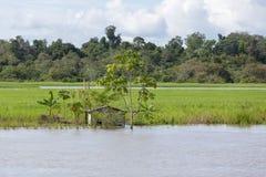 Blokhuis op stelten langs de rivier van Amazonië en het regenwoud, B Stock Foto's