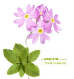 blom- älskvärt för designelement Arkivbild