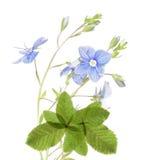 blom- älskvärt för designelement Royaltyfria Foton