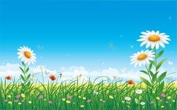 blom- äng Royaltyfri Foto