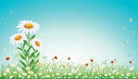 blom- äng vektor illustrationer