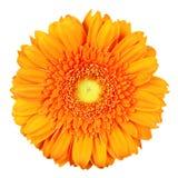 blom royaltyfri bild
