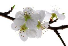 blom Arkivbild