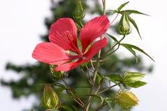 blom Arkivfoto