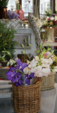 blom- Arkivbilder