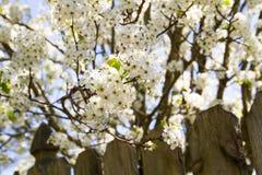 blom Arkivfoton