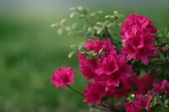 blom- abstrakt bakgrund Royaltyfria Foton
