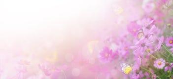Blom- abstrakt bakgrund för violett färg Arkivbilder