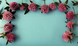 Blom- abstrakt bakgrund med växt av släktet Trifoliumblommor Arkivfoton