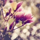 blom- abstrakt bakgrunder Royaltyfria Foton