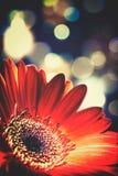 blom- abstrakt bakgrunder Royaltyfri Bild