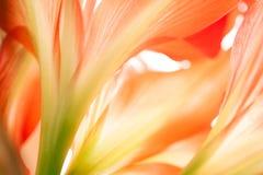 Blom- abstrakt begrepp Arkivbild