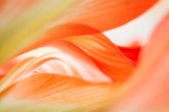Blom- abstrakt begrepp Royaltyfria Bilder
