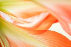 Blom- abstrakt begrepp Royaltyfri Fotografi