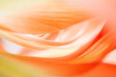 Blom- abstrakt begrepp Arkivfoton