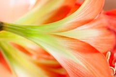Blom- abstrakt begrepp Royaltyfri Foto