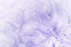 Blom- abstrakt ljus - blåvit bakgrund Kronblad av en liljablomma på en frostig bakgrund för vitblått Närbild Blommacollag arkivbilder