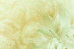 Blom- abstrakt ljus - gräsplan - vit-guling bakgrund Kronblad av en lilja blommar på vit-gräsplan en frostig bakgrund Närbild flö Arkivfoto
