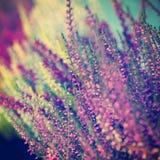 Blom- abstrakt suddig bakgrund med blommor Arkivfoto