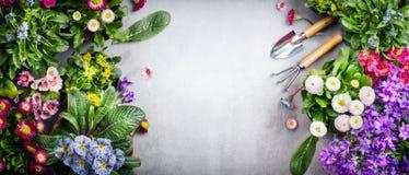 Blom- arbeta i trädgården bakgrund med variation av färgrika trädgårdblommor och arbeta i trädgårdenhjälpmedel på konkret bakgrun