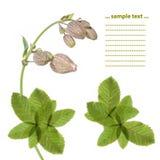 blom- älskvärt för designelement Arkivfoto