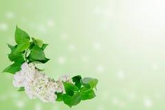 blom- bakgrund 01 Royaltyfri Foto