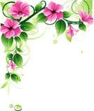 blom- bakgrund Royaltyfria Bilder