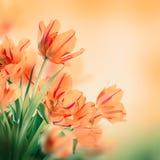 Blom- bakgrund. Royaltyfri Bild