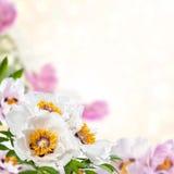 blom- bakgrund 01 Royaltyfri Bild