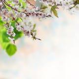 blom- bakgrund 11 Royaltyfria Bilder