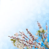 blom- bakgrund 12 Arkivbild