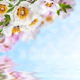 Blom- bakgrund 14 Royaltyfria Bilder